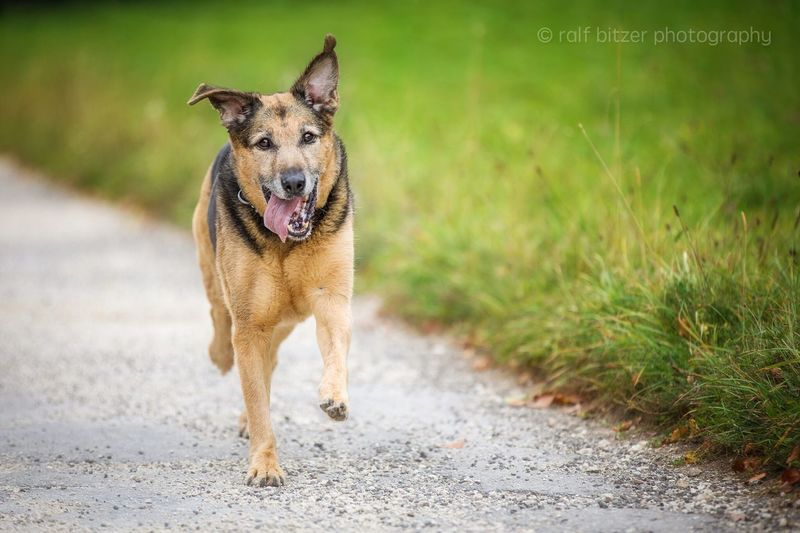 Dog One Animal Pets Animal Themes Mammal Domestic Animals No People Full Length Outdoors Day Portrait Nature German Shepherd