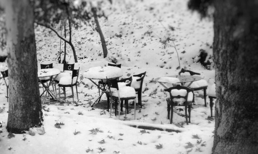 Chairs and trees during winter