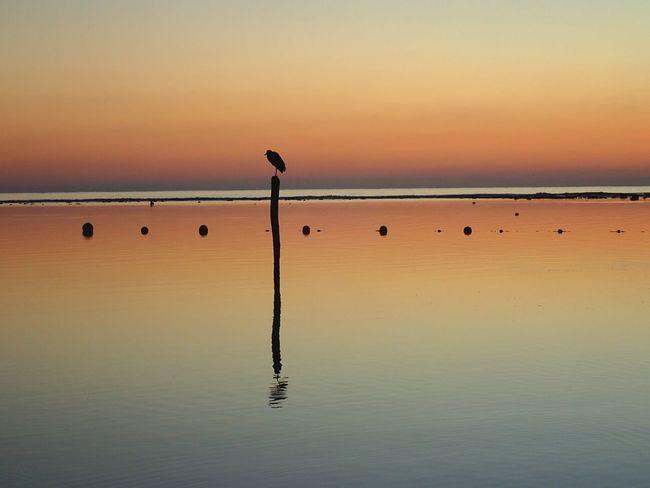 EyeEm Selects Sunset Reflection Animal Wildlife Tranquility Bird Water Scenics Beauty In Nature Nature Animals In The Wild Tranquil Scene Lake Outdoors No People Flamingo Sky Horizon Over Water Beach Dawn Day CARIBBEANLIFE Sunrise Shotzdelight Wanderlust EyeEmNewHere