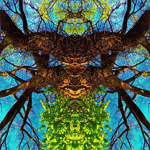 Beauty In Nature Multi Colored Tree Branches Sky Symmetry Face Monster No People Outdoors Creativity Unique Close-up Futuristic Art Is Everywhere IPhoneography Do You See What I See? Artbyart