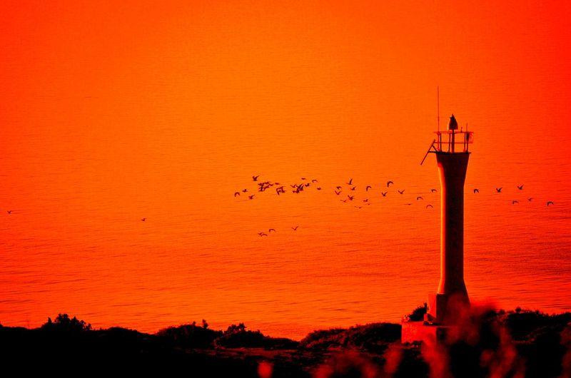 Colors Colorful Sea Sunset Birds Denizfeneri Deniz Günbatımı Gün Batımı Kuşlaruçuyor Foca Eski Foça Izmir Foça Yeni Foça Showcase: January