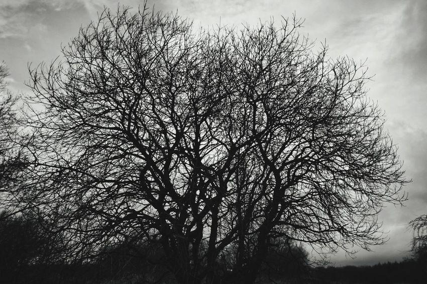 Tree Silhouette Branch Sky Close-up Cloud - Sky Storm Cloud Single Tree Storm Overcast Farmland Dramatic Sky
