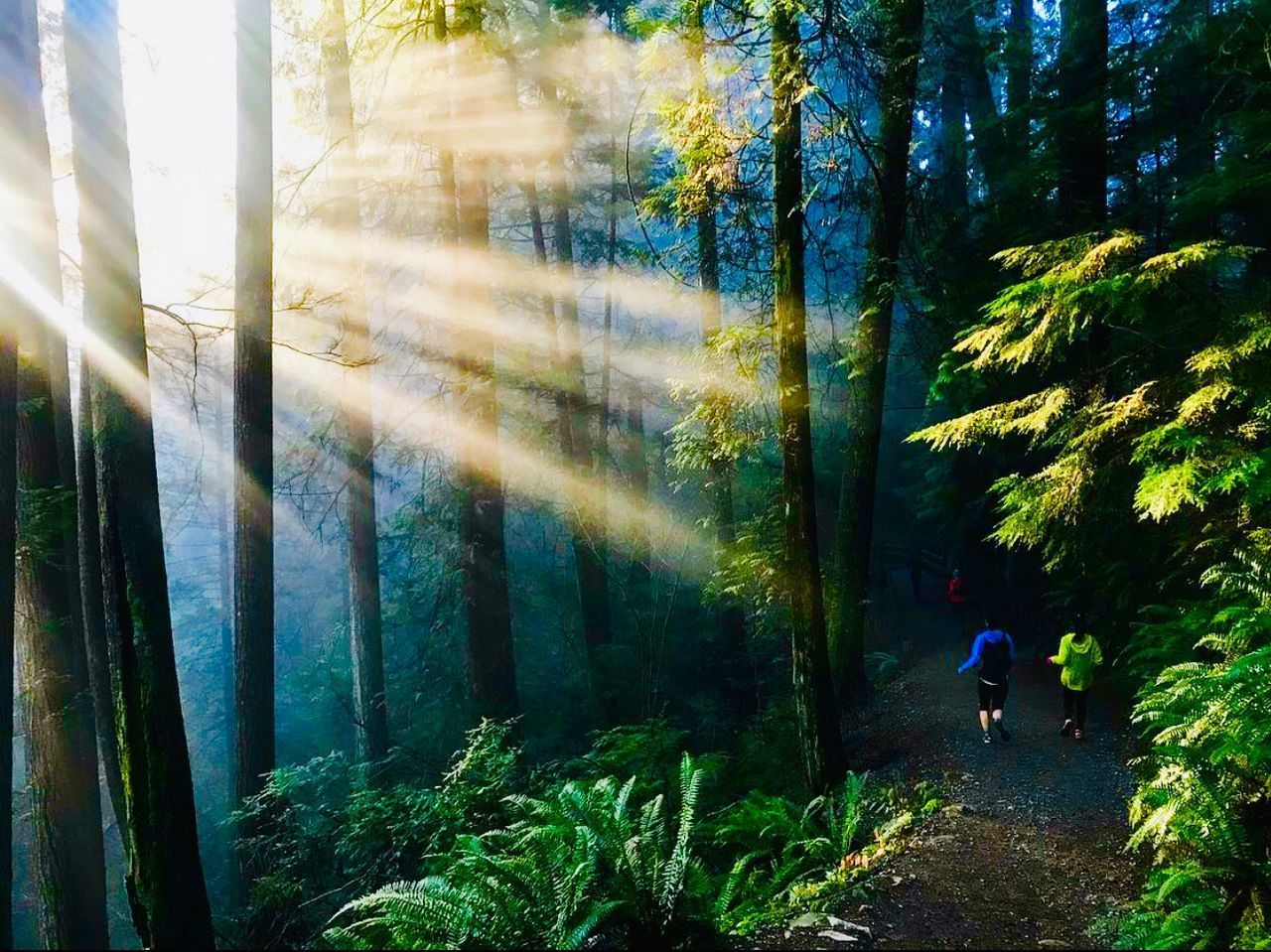 tree, plant, forest, land, real people, nature, growth, beauty in nature, walking, day, leisure activity, full length, men, one person, lifestyles, sunlight, green color, outdoors, tranquility, woodland