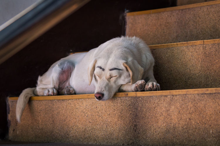 white street dog sleeping on the stairs Lifestyle Animal Themes Canine Close-up Cute Dog Domestic Animals Eyes Closed  Friends ❤ Funny Faces Homeless Mammal No People One Animal Outdoor Outdoors Pets Portrait Relax Relaxation Sleeping Staircase Street White Wrote Eyebrow