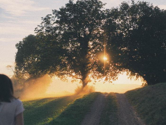 Sunny dust Water Tree Sunset Sunlight Sky Silhouette Sunbeam Orange Color Idyllic Tranquil Scene Scenics Sun Foreground
