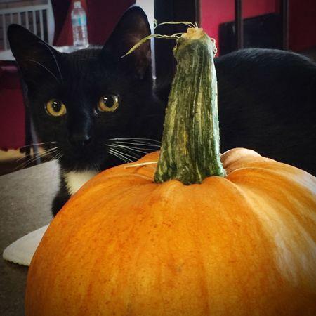 Animals Black Cat Photography Black Cat Pumpkin Halloween Halloween Black Cat