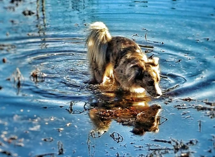 Showcase: February -miko- Wow!!😋 Pond Life Better Look Twice Pond Reflections Outdoor Photography Bestpicoftheday EyeEmBestPics EyeEm Best Shots Today Hot Look  Dogoftheday My Dogs Are Cooler Than Your Kids Dogslife Play Time Dog❤ Pet Photography  Pets Corner Animal_collection Animal Photography Dog Of The Day Capturing Freedom Life In Motion Ripples In The Water