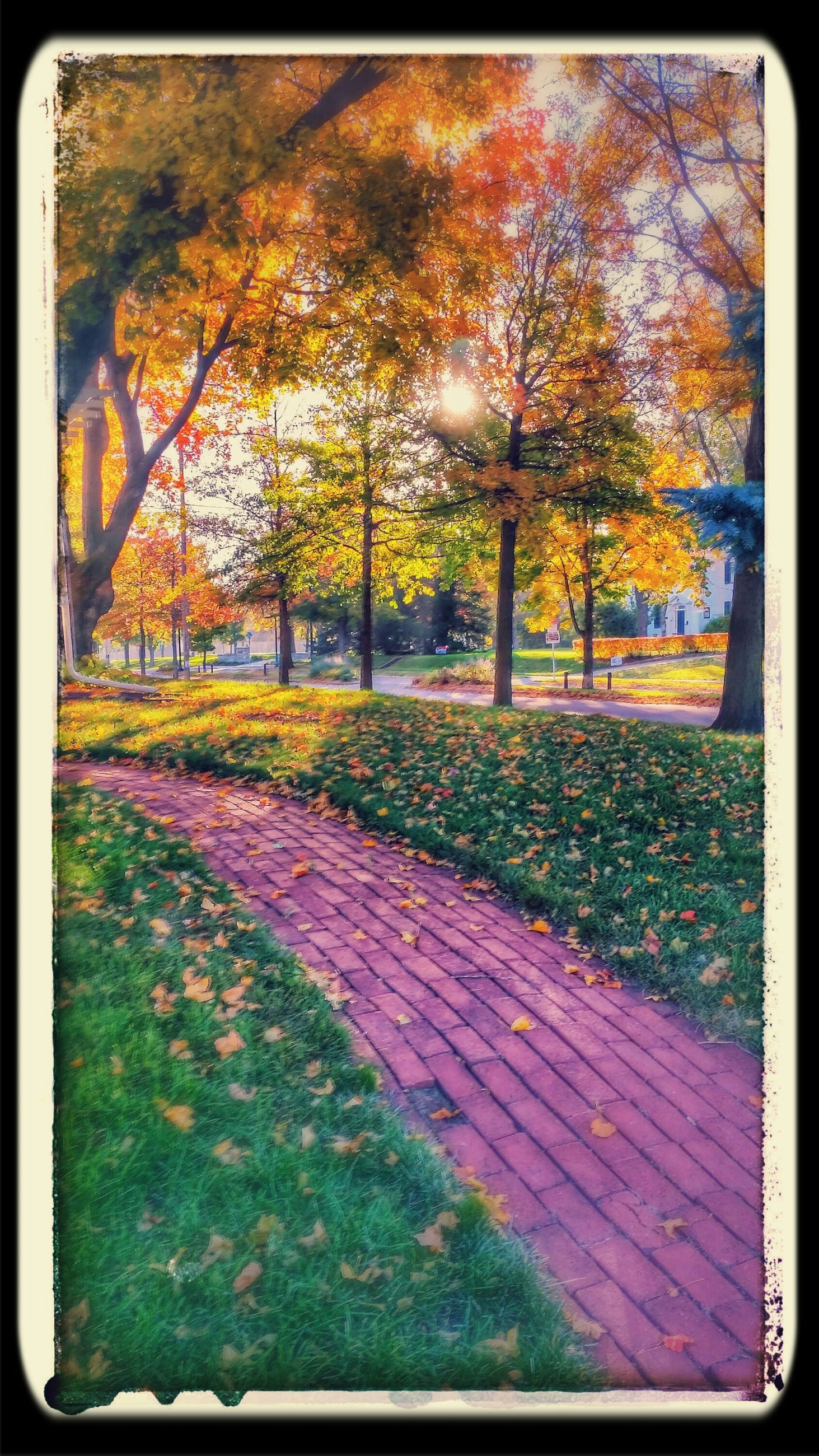 transfer print, tree, auto post production filter, park - man made space, autumn, grass, tranquility, nature, growth, park, footpath, day, outdoors, tree trunk, change, no people, branch, fence, season, sunlight