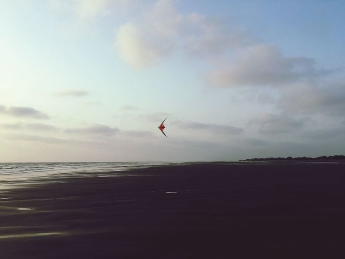 Kites on the beach Sky Water Sea Cloud - Sky Land Beauty In Nature Scenics - Nature Beach Nature Horizon Horizon Over Water Mid-air Kite Outdoors Flying Motion Tranquility Day Tranquil Scene
