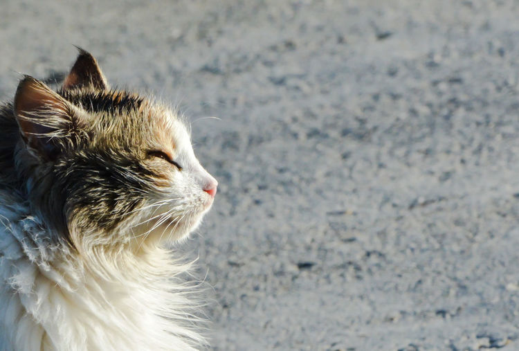 Animal Themes Cats 🐱 Close-up Day Nature One Animal Outdoors Pets Taking Sunbath