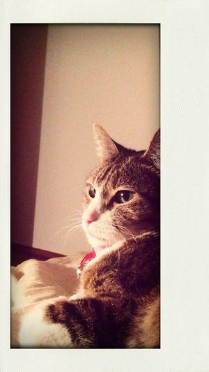 Nina - The Cat