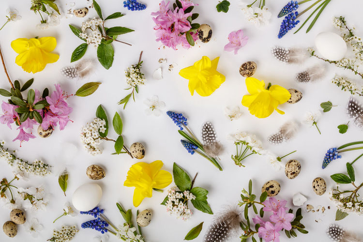 High angle view of flowers and eggs over white background