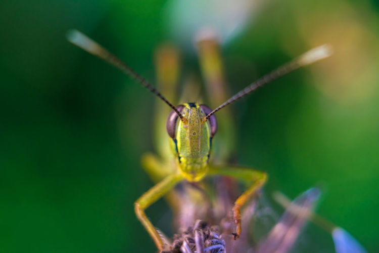 Close-up of grasshopper on plant