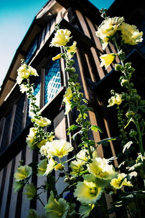 And the rest - National Trust Ightham Mote Historic Historic Building Flower Window Box Flower Head Yellow Window Close-up Architecture Building Exterior Plant Built Structure Building Exterior
