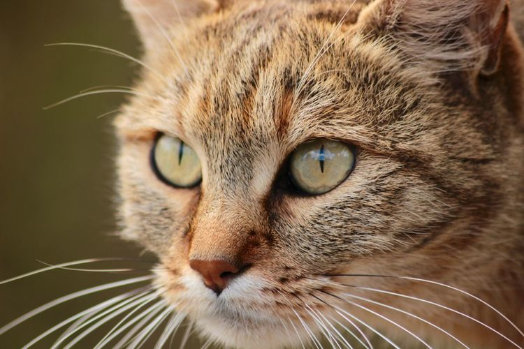 Close-up of brown cat looking away