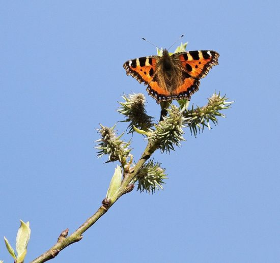 Low angle view of butterfly pollinating flower