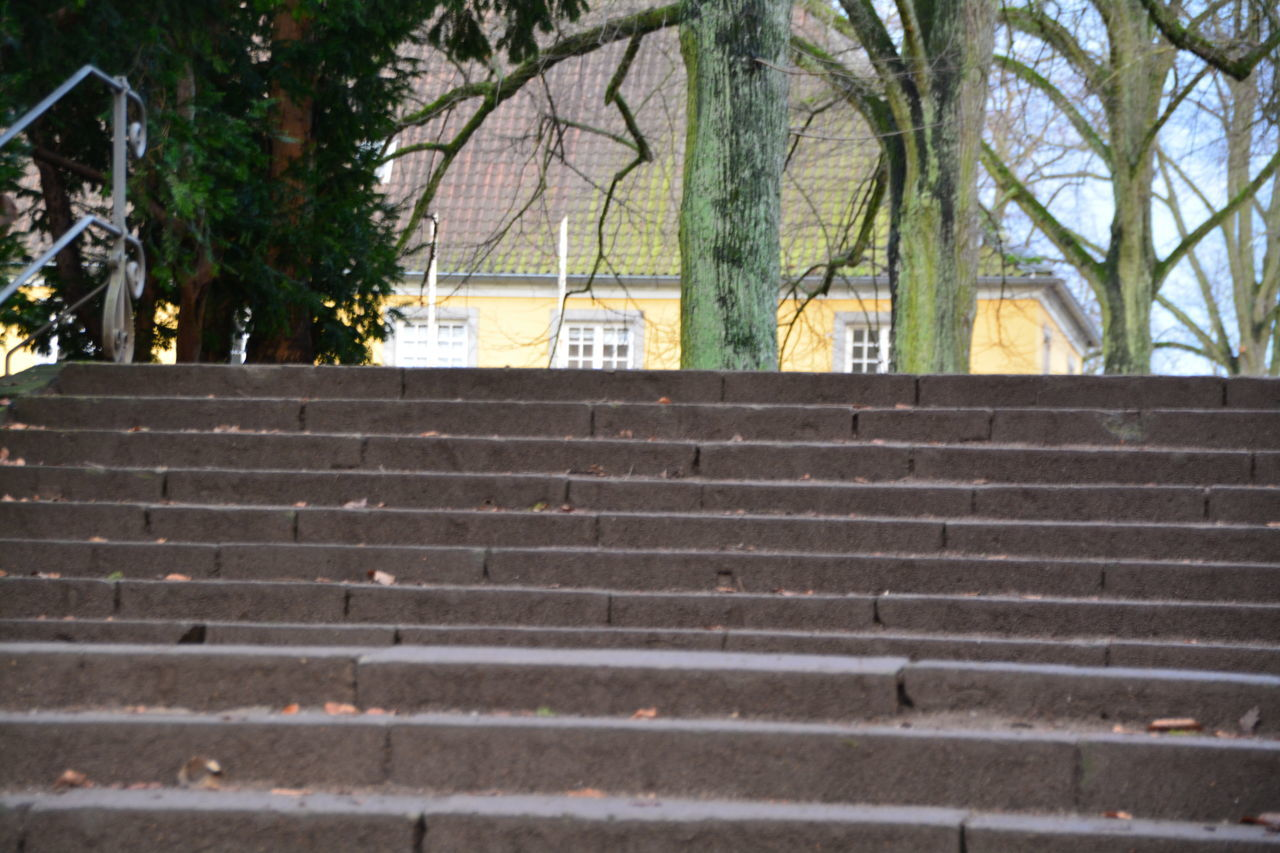 steps, staircase, steps and staircases, built structure, tree, building exterior, education, architecture, day, university, no people, outdoors, city