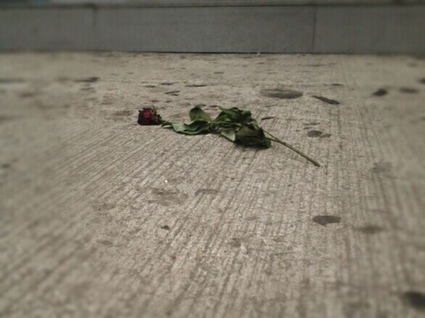 Lost love? Flower Wilted Wilted Rose Wilted Flower Ground Fallen Rosé