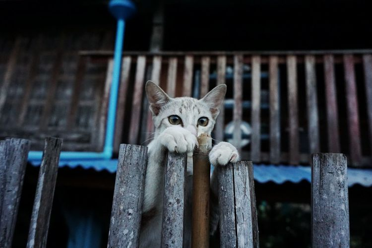 Portrait of cat rearing up on wooden posts
