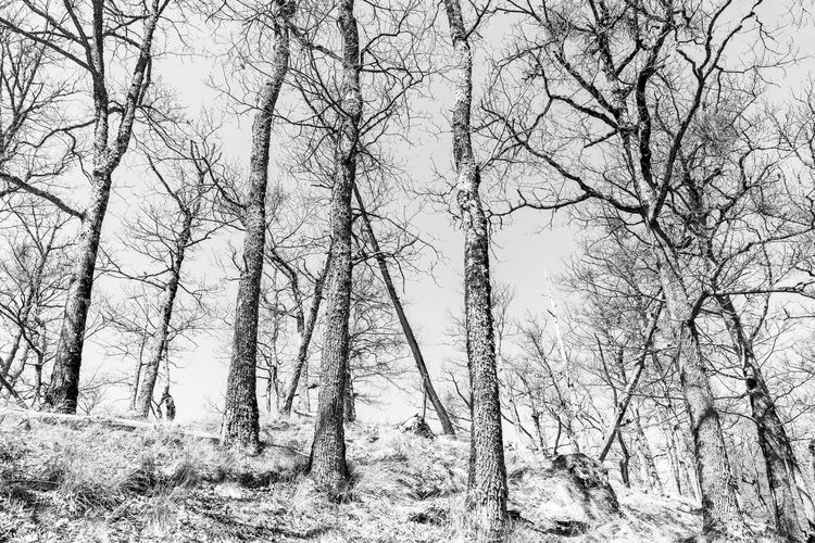 Low angle view of bare trees in forest against sky