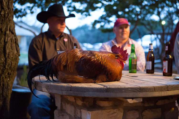 Animals Casual Clothing Chicken Day Focus On Foreground Leisure Activity Lifestyles Mammal Outdoors Portrait
