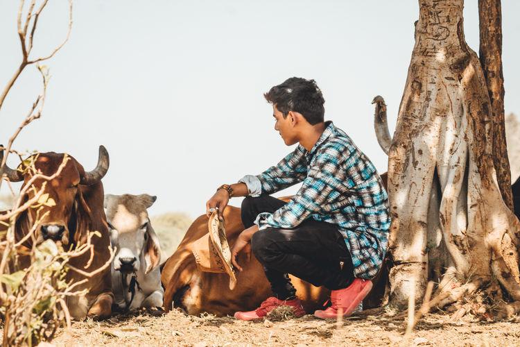 Teenage boy crouching by cattle on field
