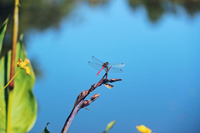 Dragonfly on board. Reflection Naturelovers Dragonfly Plant Nature Animals In The Wild Day No People Sky Animal Wildlife Beauty In Nature Branch Growth Flowering Plant Blue Animal Close-up Flower Animal Themes Tree Focus On Foreground Low Angle View Insect