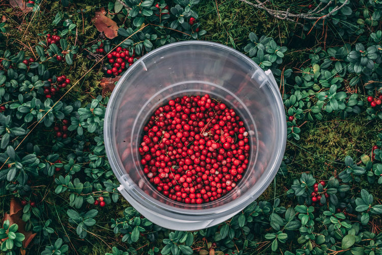 High angle view of berries in basket