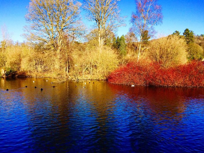 Colourful nature Water Tree Nature Reflection Waterfront Beauty In Nature Outdoors Scenics Tranquil Scene Sky Lake Tranquility No People Day Nautical Vessel Architecture Freshness Winter Colourful Nature Ashbourne Derbyshire Countryside