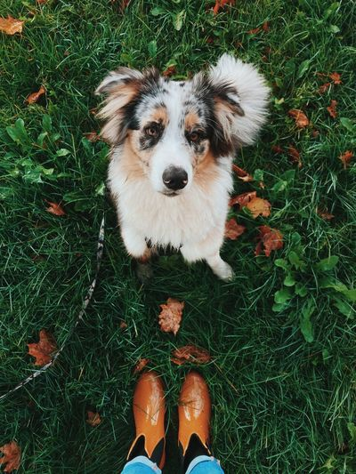 High angle portrait of dog standing on field