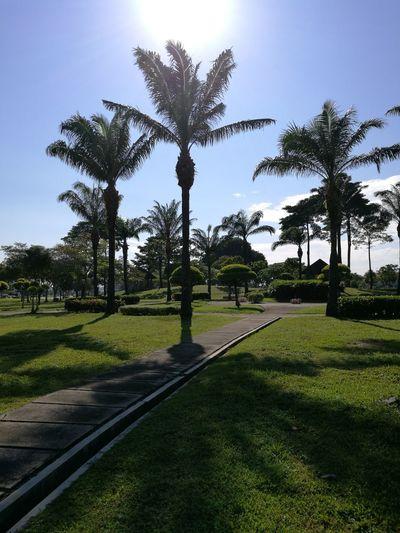 Taken In Shadow Landscape Palm Tree Clear Sky Outdoors Johor Bahru