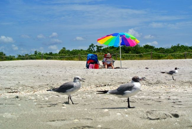 Life Is A Beach Sanibel Florida Sanibel Islands