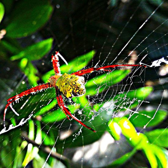 Spider Focus On Foreground Nature Outdoors Wonderful Indonesia Palembang-Indonesia Lahat Obelixphotohraphy Insect Animal Themes Beauty In Nature Zoology Spider Web