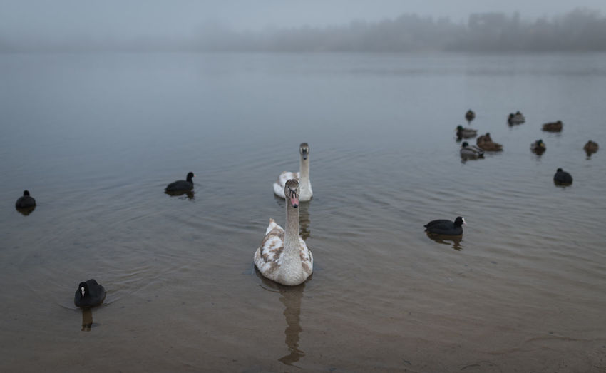 Animal Themes Animal Wildlife Animals In The Wild Beauty In Nature Bird Lake Nature No People Outdoors Swimming Water
