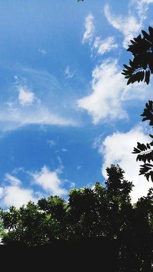 Tree Blue Silhouette Palm Tree Sky Cloud - Sky