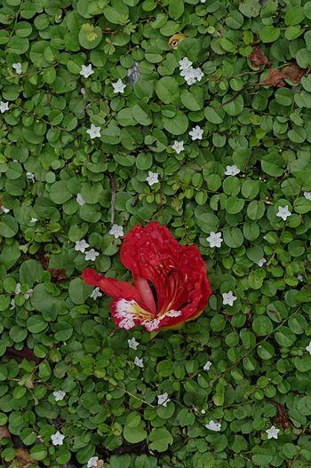Green Grassgreen Grassland Flowers White Flower RedFlower Greenbackground Floor Green Floor Mini Flowers One Red Flower Star