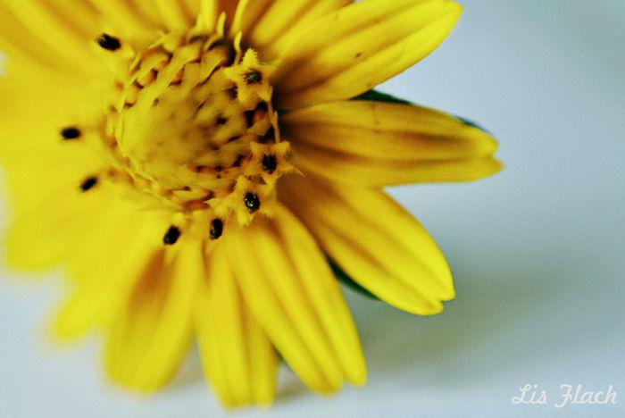 Fotografiaamadora Photography Flores Flower Flor