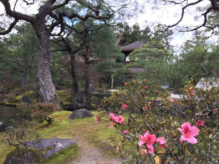 Tree Flower Growth Nature Beauty In Nature No People Springtime Outdoors Plant Day Sky Freshness Fragility Ginkakuji Temple