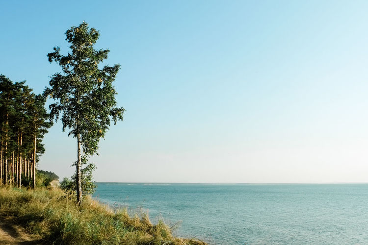 Beauty In Nature Clear Sky Copy Space Day Growth Horizon Horizon Over Water Land Nature No People Non-urban Scene Outdoors Plant Scenics - Nature Sea Sky Tranquil Scene Tranquility Tree Water