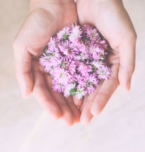 Hand holding pink flowers Beauty In Nature Blossom Botany Close-up Cropped Delicate Flower Flower Head Focus On Foreground Fragility Freshness Hand Holding Flower Holding Human Finger Lifestyles Nature Part Of Pastel Person Petal Pink Color Pink Flower Plant Woman