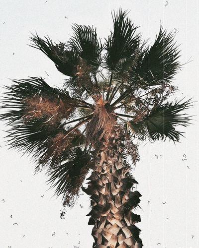 Palm. Palm Tree Palms Palmiers 🌴👣 Tree Nature Yalikavak September Vscoedit Vscofilm Vscogram Autumn Vscogood Bodrum VSCO Vscoturkey Sunset