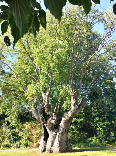 Árbol Por Fuera Tree Outside Arbre Per Fora