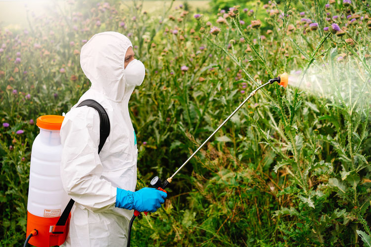 Man in protective suit and mask spraying herbicide on weed