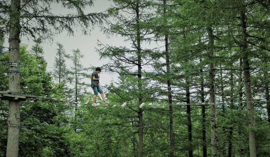 Treetop Hiking, Hokkaido Brave Fear Fearless High Hokkaido Rope Bridge Adventure Casual Clothing Danger Dangerous Extreme Sports Fear Of Heights Forest Green Color Growth Leisure Activity Lifestyles One Person Outdoors Teenager Tree Treetop Wobbly WoodLand Zipline A New Beginning This Is Strength A New Perspective On Life Human Connection Moments Of Happiness 2018 In One Photograph My Best Photo Moms & Dads