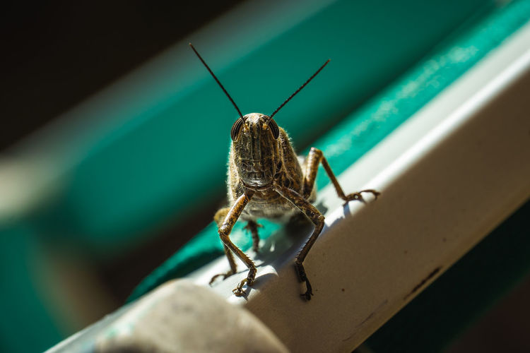 Close-up of insect, grasshopper occupied my deck chair