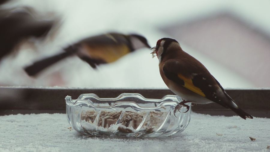Close-up of bird eating from bowl during winter