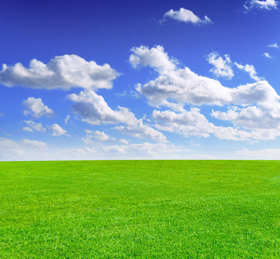 Green meadow and blue sky, summer scene with copy background. Copy Space Field Grass Green Backgrounds Beauty In Nature Blue Sky Clouds Environment Field Grass Green Field Green Meadow Land Landscape Lawn Meadow Nature Nature Backgrounds No People Outdoors Plant Scenics - Nature Sky Tranquil Scene