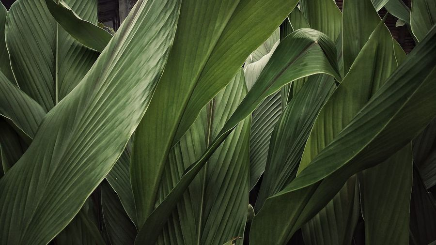 Full frame of palm tree leaves