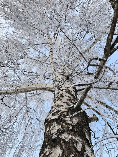Low angle view of bare tree during winter