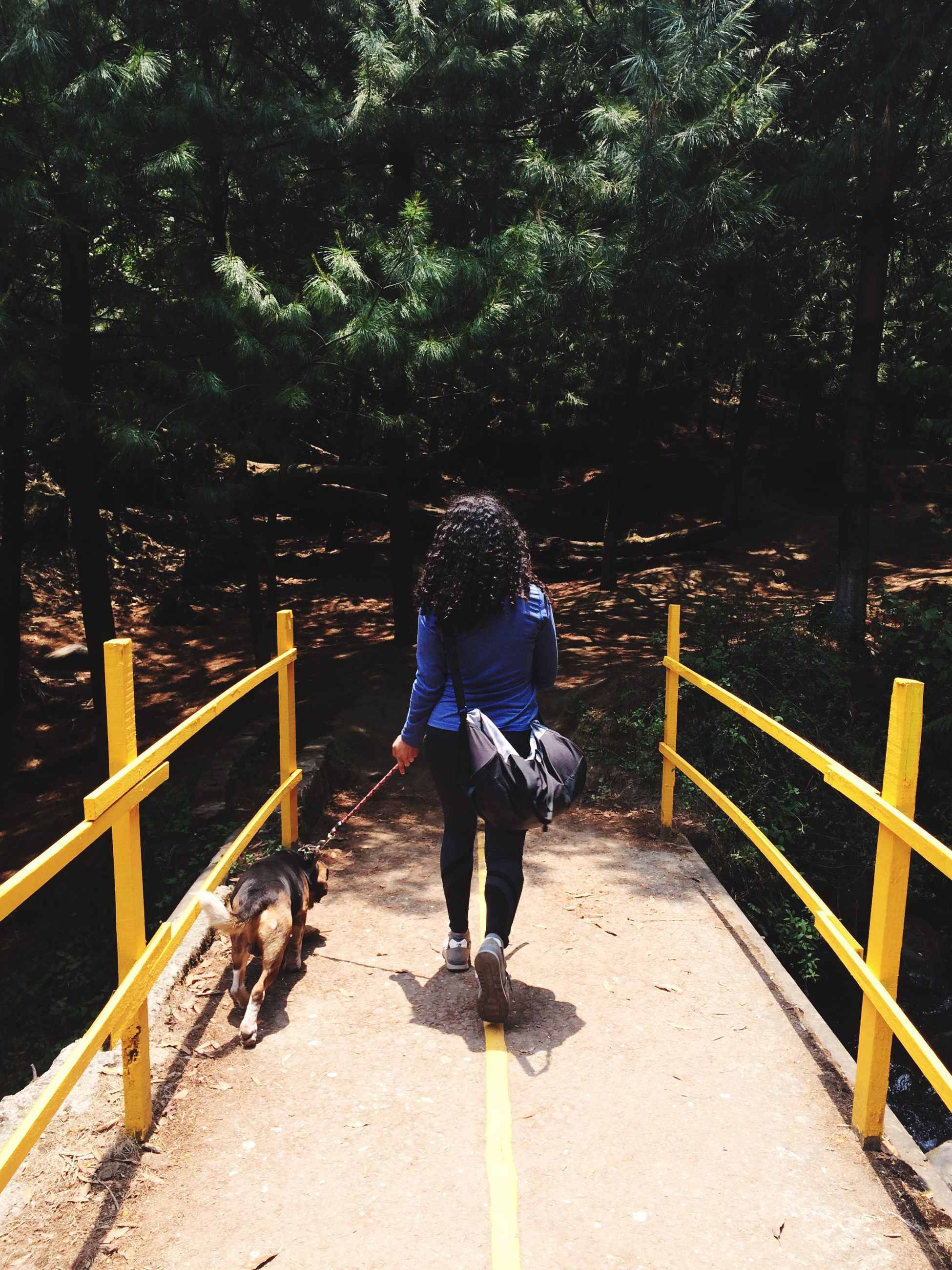 railing, tree, real people, full length, rear view, one person, walking, leisure activity, one animal, outdoors, lifestyles, day, casual clothing, nature, pets, bridge - man made structure, dog, women, mammal, domestic animals, footbridge, beauty in nature, childhood, young women, young adult, people